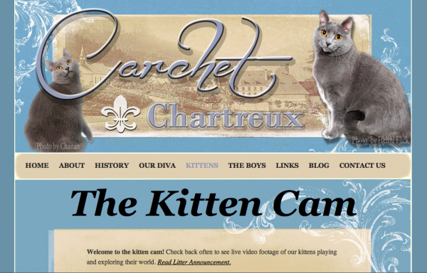 Carchet Cats: International Award Winning Chartreux Cats & Kittens