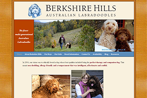 berkshirehillslabradoodles_S